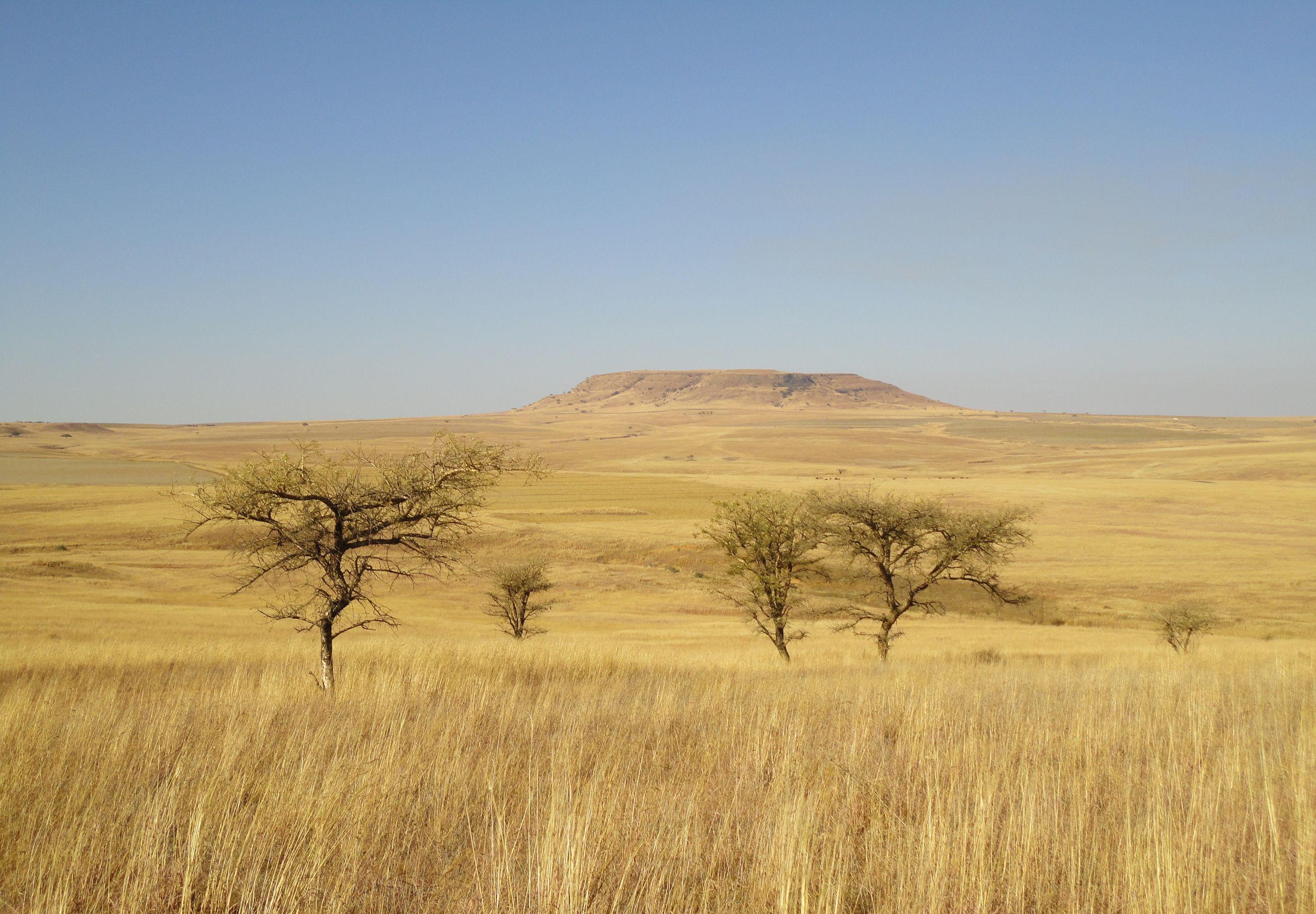 Africa The Serengeti Full Movie