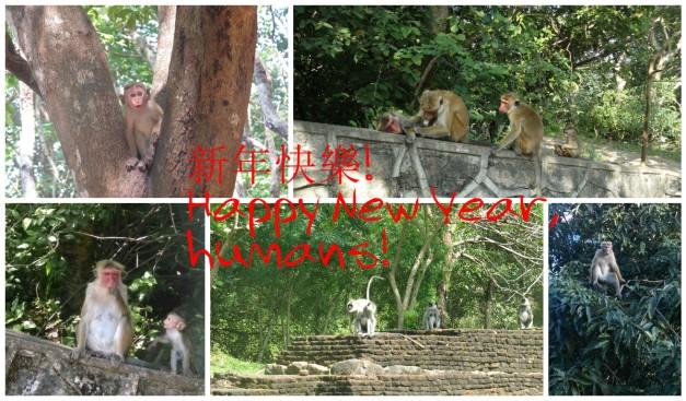 Monkey greeting 2
