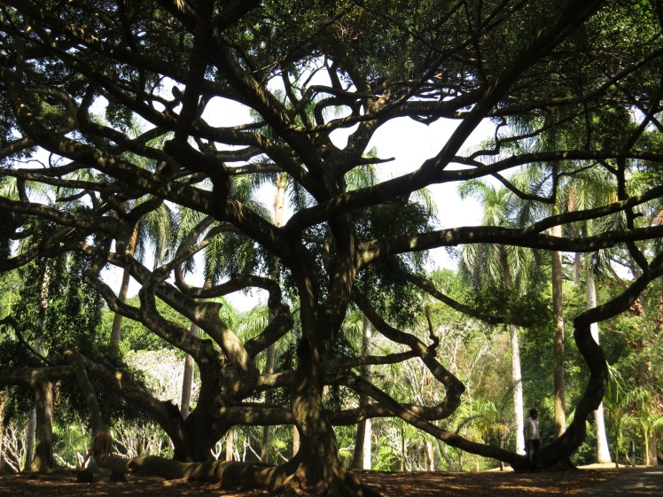 Peradeniya Botanical Garden, Sri Lanka